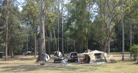 The camping area is a large grassy area with shade from large gum trees -- photo of southern section
